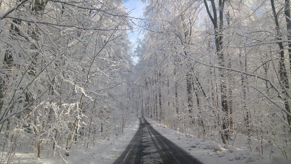 Hirschkalbsragout - Winter im Glaswald mit viel Schnee