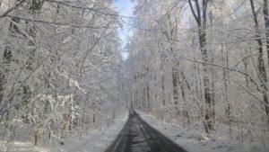 Winter im Glaswald mit viel Schnee