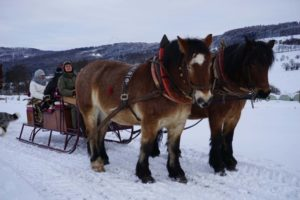 Pferdeschlittenfahrt, 2 Pferde am Schlittenmit Personen