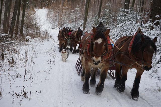 Pferdeschlittenfahrt, Schlitten im tiefverschneiten Wald