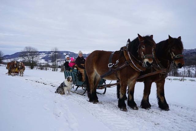 Pferdeschlittenfahrt, Schlitten mit Personen und Hund