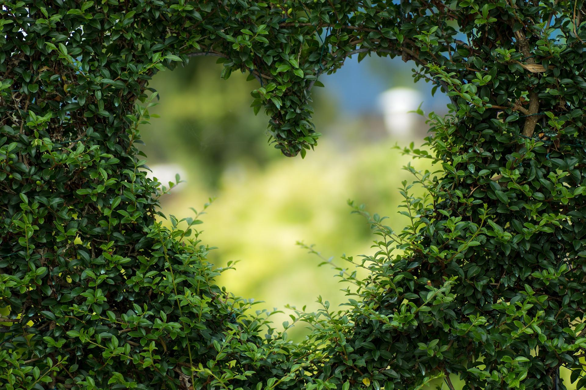 Valentinstag, Herz in Hecke