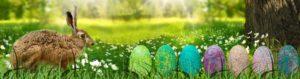 Osterhase auf Wiese mit Ostereiern