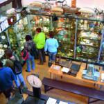 Pfundsmuseum - Vitrinenraum