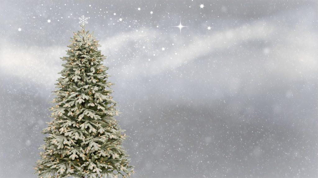 Weihnachtsbaum - Betriebsferien und Sternenlichtspaziergang zu Weihnachten