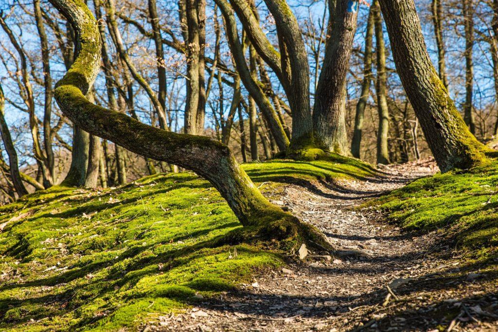 Genusswanderwoche - Waldweg, Mooswuchs